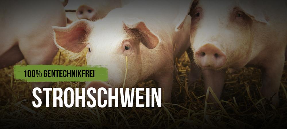 Greiner_Shop_header_1000x450_strohschwein
